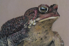 toad-detail-scaled