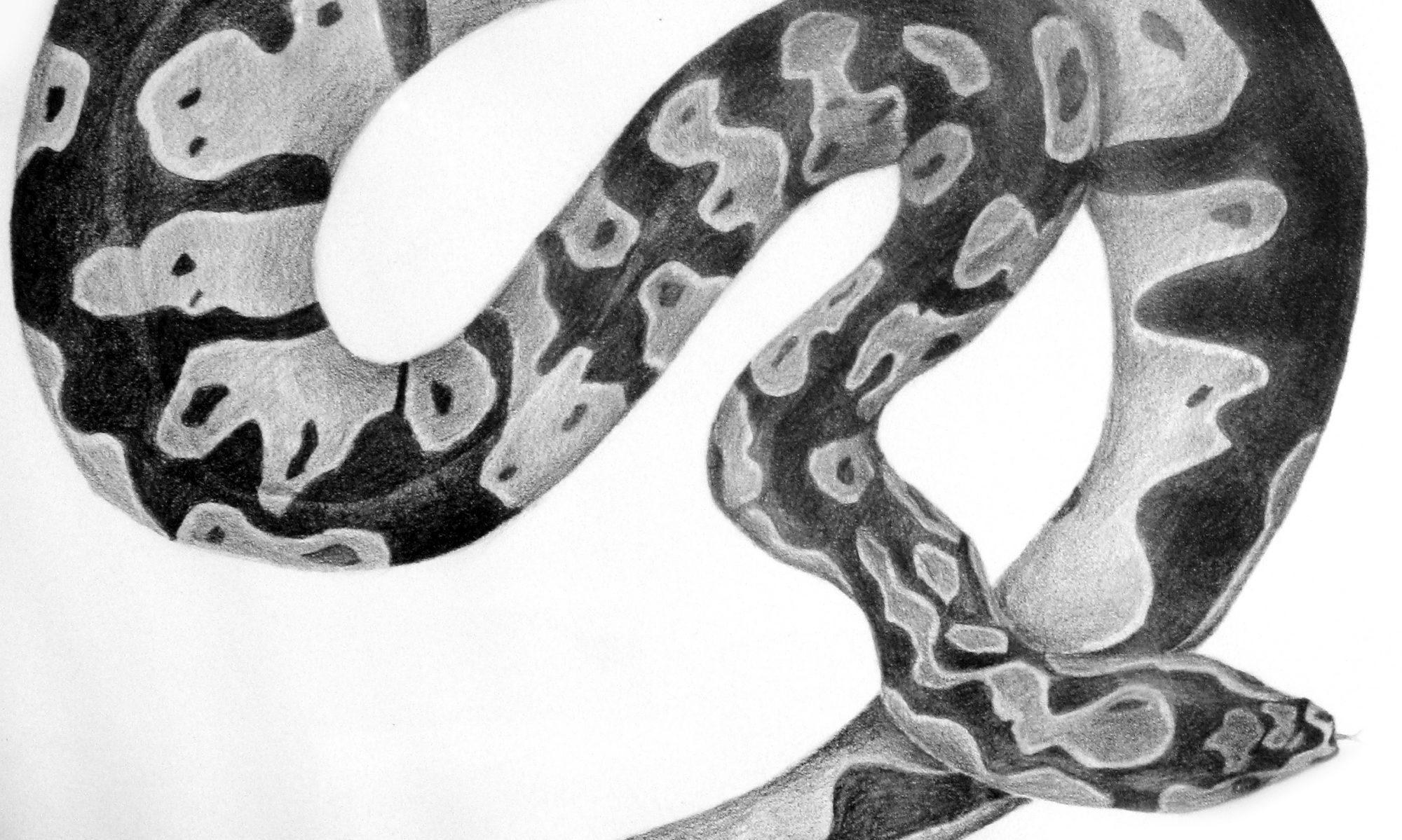 Cobra Lily Design